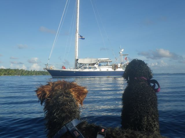Dogs and boat