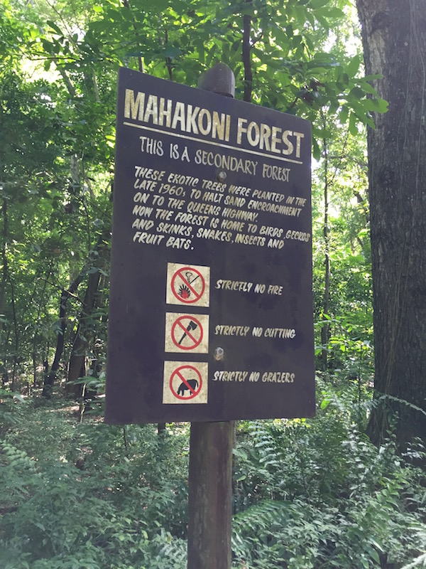 mahog forrest
